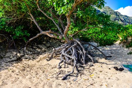 sandy beaches: Sandy beaches and tree