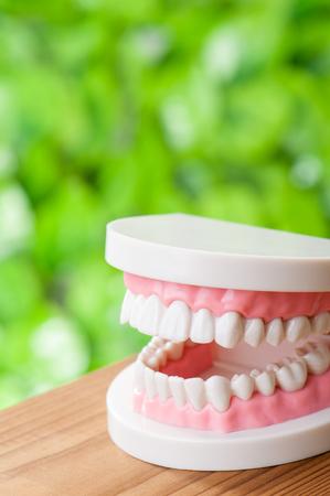 molares: imagen dental Foto de archivo