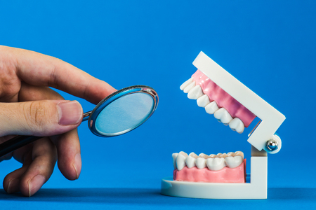 oral surgery: Model of teeth Stock Photo