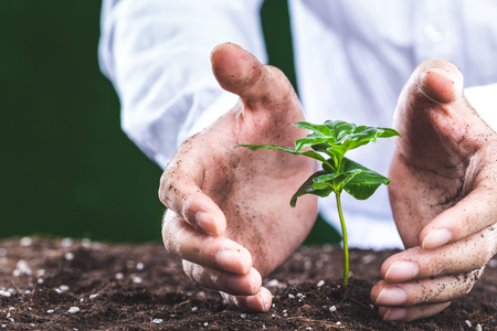 hands of man that grow plants Stock Photo