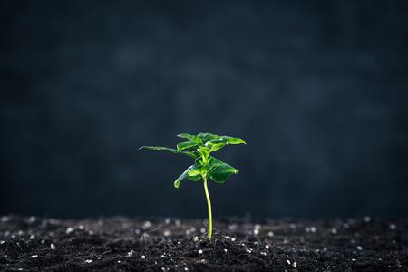 crecimiento planta: Crecimiento de la planta