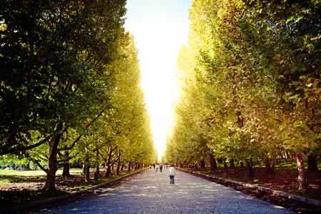 sycamore leaf: Tree-lined street