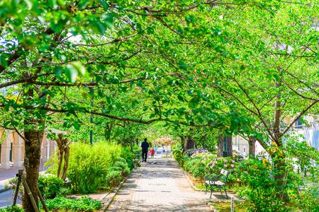 walk path: Flower path, green tunnel Stock Photo