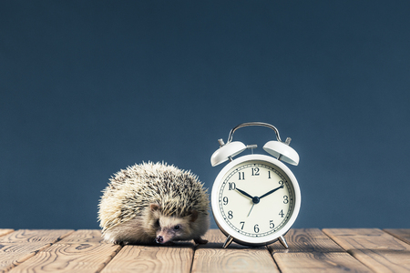 Hedgehog Stok Fotoğraf - 80563943