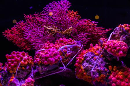 サンゴ 写真素材 - 86495839