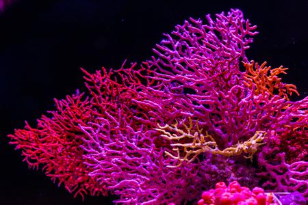 サンゴ海の下で 写真素材 - 86268907