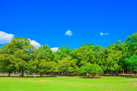 Forest and park at Nara Japan