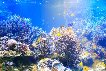 Aquarium fish tank Stock Photo