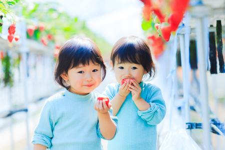 Kids eat strawberries 写真素材