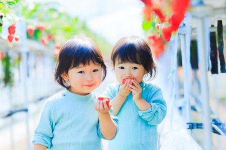 Kids eat strawberries Stockfoto