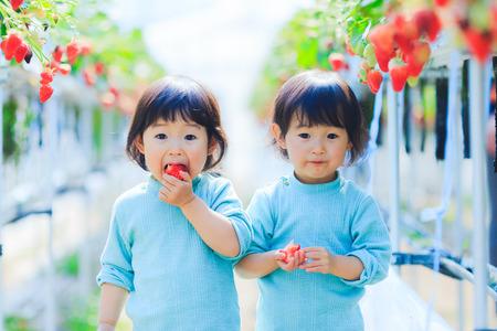 Kids eat strawberries 写真素材