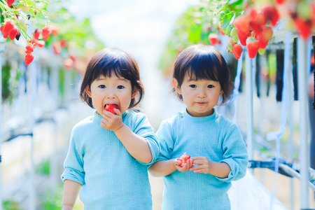 Kids eat strawberries Archivio Fotografico