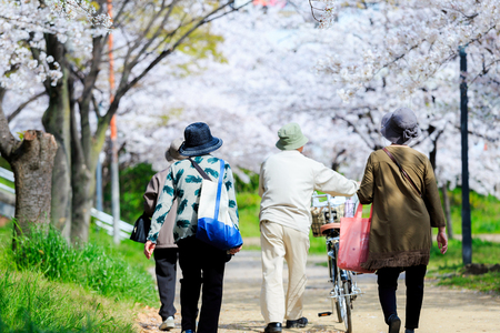 Elderly people and cherry blossoms Фото со стока