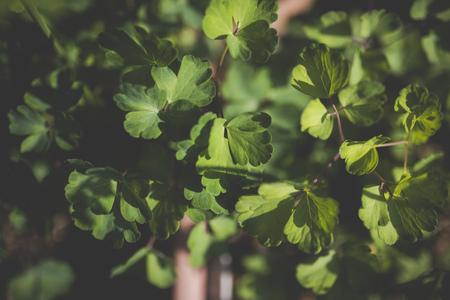Green and plants Reklamní fotografie