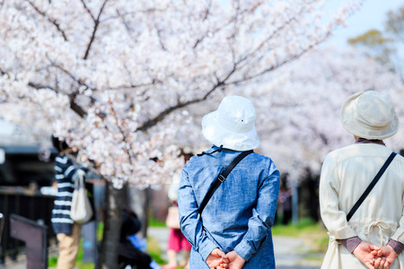 Elderly people and cherry blossoms Stok Fotoğraf