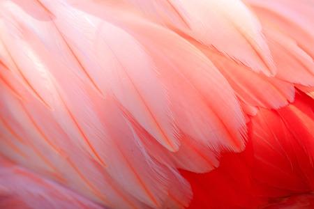 Flamingos and textures Stok Fotoğraf