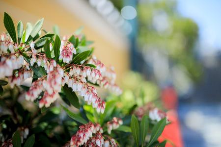 Asebi and flowers
