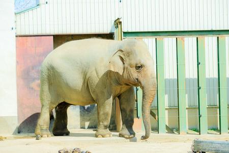 Elephants and animals Zdjęcie Seryjne