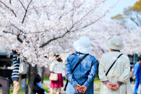 Elderly people and cherry blossoms Stock Photo
