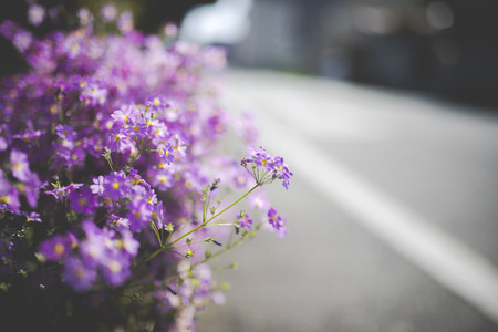 Purple and small flowers and plants