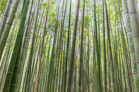 Bamboo forest and texture