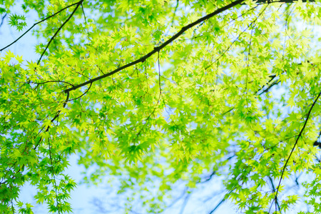 Green and Trees