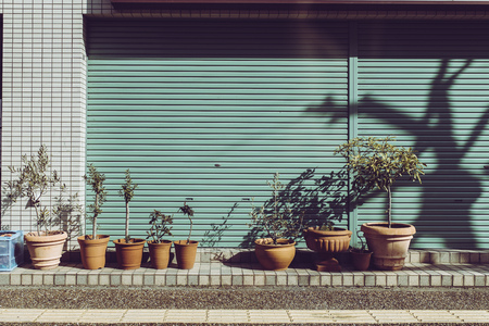 Shutters and plants