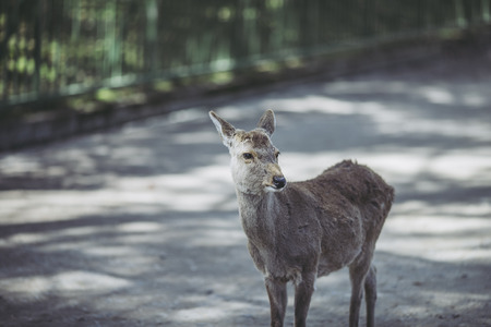 Nara Prefecture of Japan and Deer