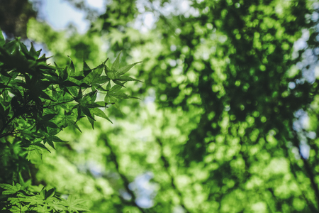 Fresh green leaves and trees