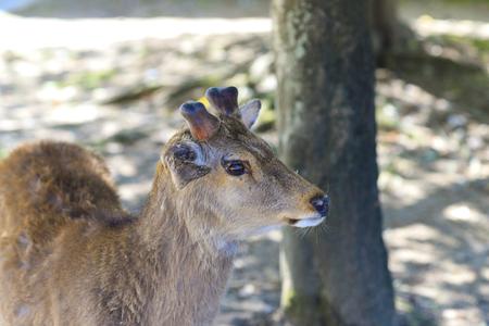 Nara Prefecture of Japan and Deer