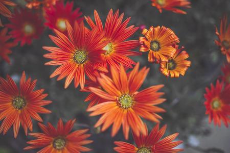 Orange and flowers