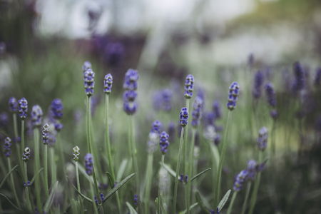 Purple flowers and plants