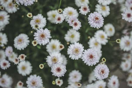 White flowers and birds-eye view Stok Fotoğraf