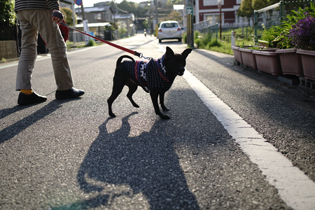 Walk with a black dog