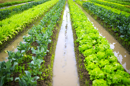 Green and vegetable fields