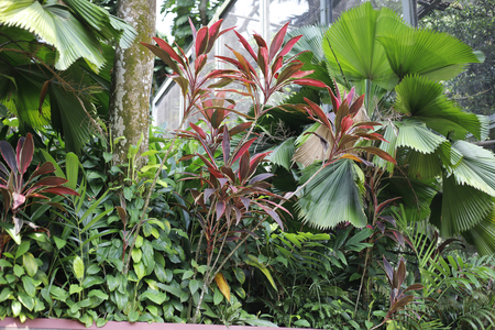 Jungle and texture