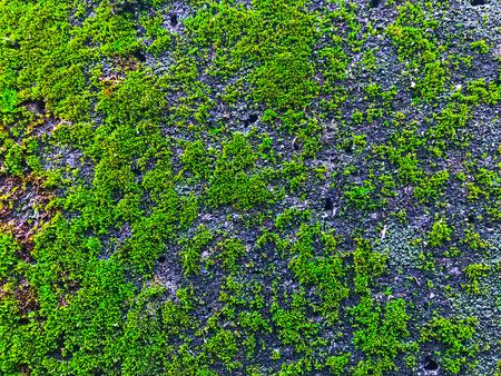 Moss and texture Stok Fotoğraf