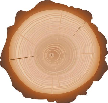 wood grain: Tree Stump Illustration