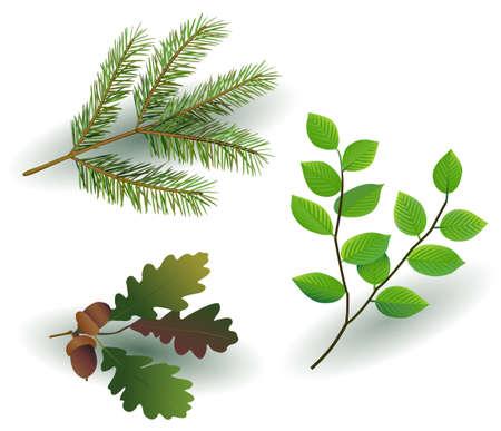tree branch Stock Vector - 18068109