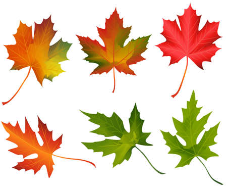 autumn leaves  Stock Vector - 18175677