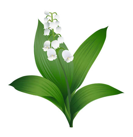 wed beauty: Lily of the Valley