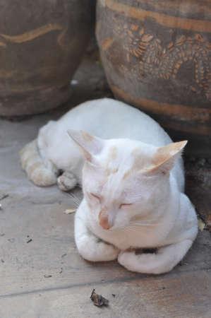 benign: cat