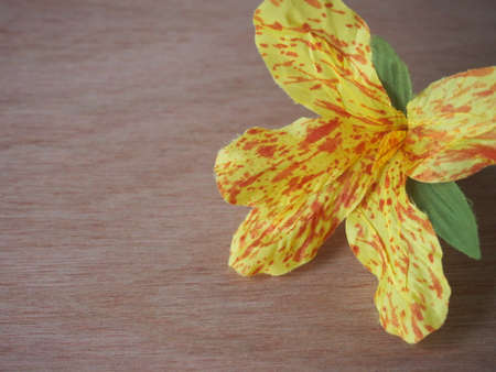 invented: Invented canna flower for offering to Daddy on wood background