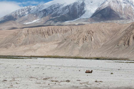 Single camel sitting in a vast mountain landscape Stock Photo