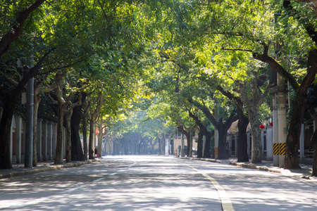 concession: Empty street in sunlight in the french concession in China