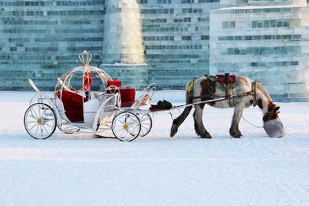 Horse and carriage in winter in the ice city of Harbin