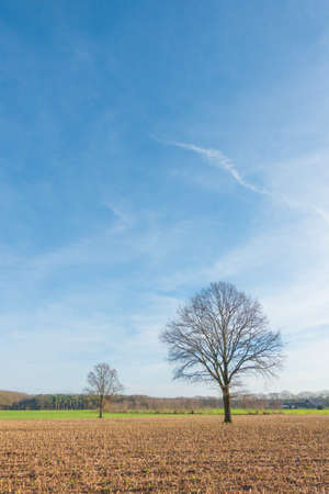 large tree: Small and big tree with blue sky and an empty field