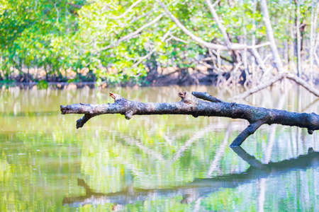 langkawi island: Branch over water in the mangroves of Langkawi island, Malaysia Stock Photo