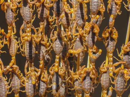 sea snake: Scorpion skewers closeup on a sunny day at market in Beijing