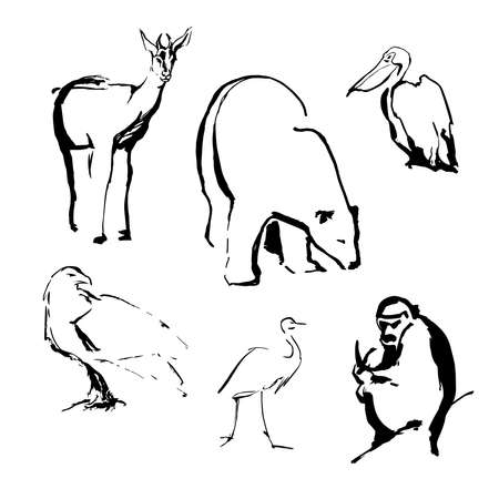 Sketches of animals and birds polar bear, deer, monkey, eagle, heron, pelican made by black ink on a white background realistic image. Vector illustration
